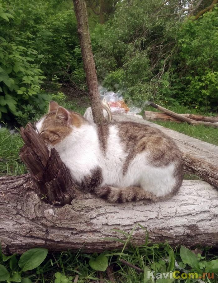 Кот и кол. Оптическая иллюзия