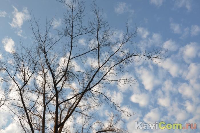 Дерево и облака!