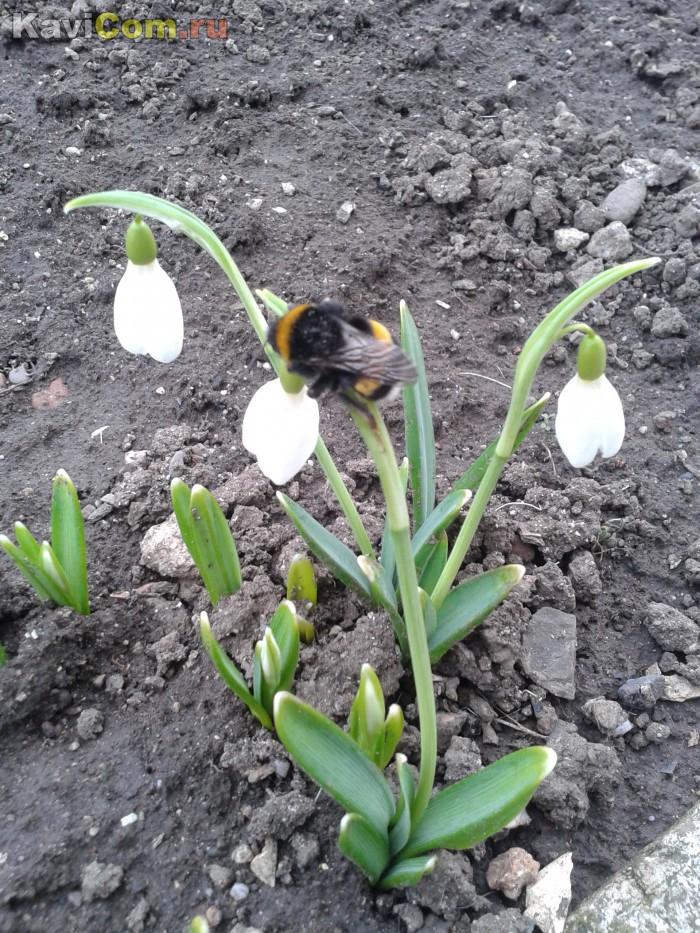 А недавно была весна... Теплое лето как будто проскользнуло незаметно и осень...