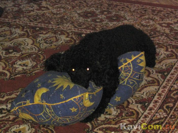 Моя любимая подушка - моя лучшая подружка!