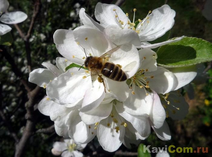 Будет мёд