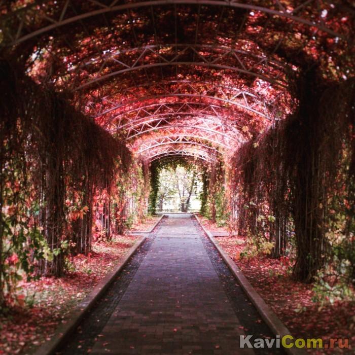 Тоннель в осень