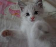 Котёнок Сёма