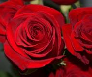 Романтические розы!