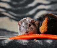 Морковку последнюю и ту пополам...