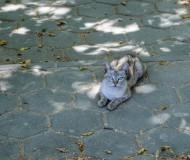 Оскольский котейка