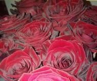 Роза-Королева цветов