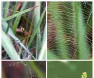 Из жизни пауков...
