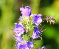 Пчёлка-трудяга