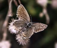 Бабочка крылышками
