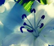 Вы любите орхидеи-2?
