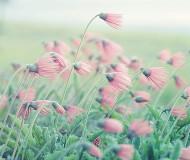Лютики - цветочки