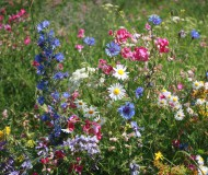 Полевые цветы.