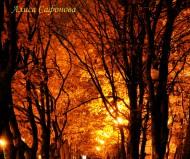 Дорога в парке в м-не Королёва