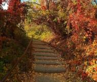 Осенние краски