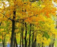 Осень ...в городе