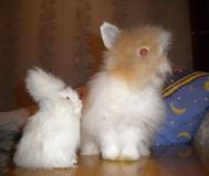 Отличите от игрушки: тот же хвостик, те же ушки!