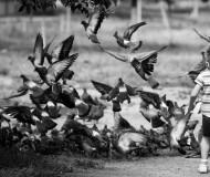 Вперед за голубями!