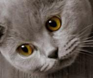 Жёлтые глазааааааа, фспаминаю умираююю...
