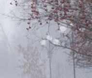 А снег идет ...