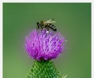 Просто пчёлка.