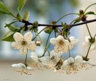Долгожданное цветение!