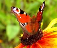 Бабочка на цветке...