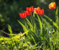 Яркие цвета весны