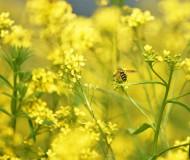 Жёлтые полевые цветы