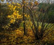 Осеннее обнажение
