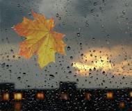 Листья жёлтые над городом кружатся...