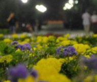 На аллее цветов