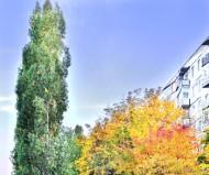 Городской осенний пейзаж
