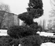 Ботаническая спираль