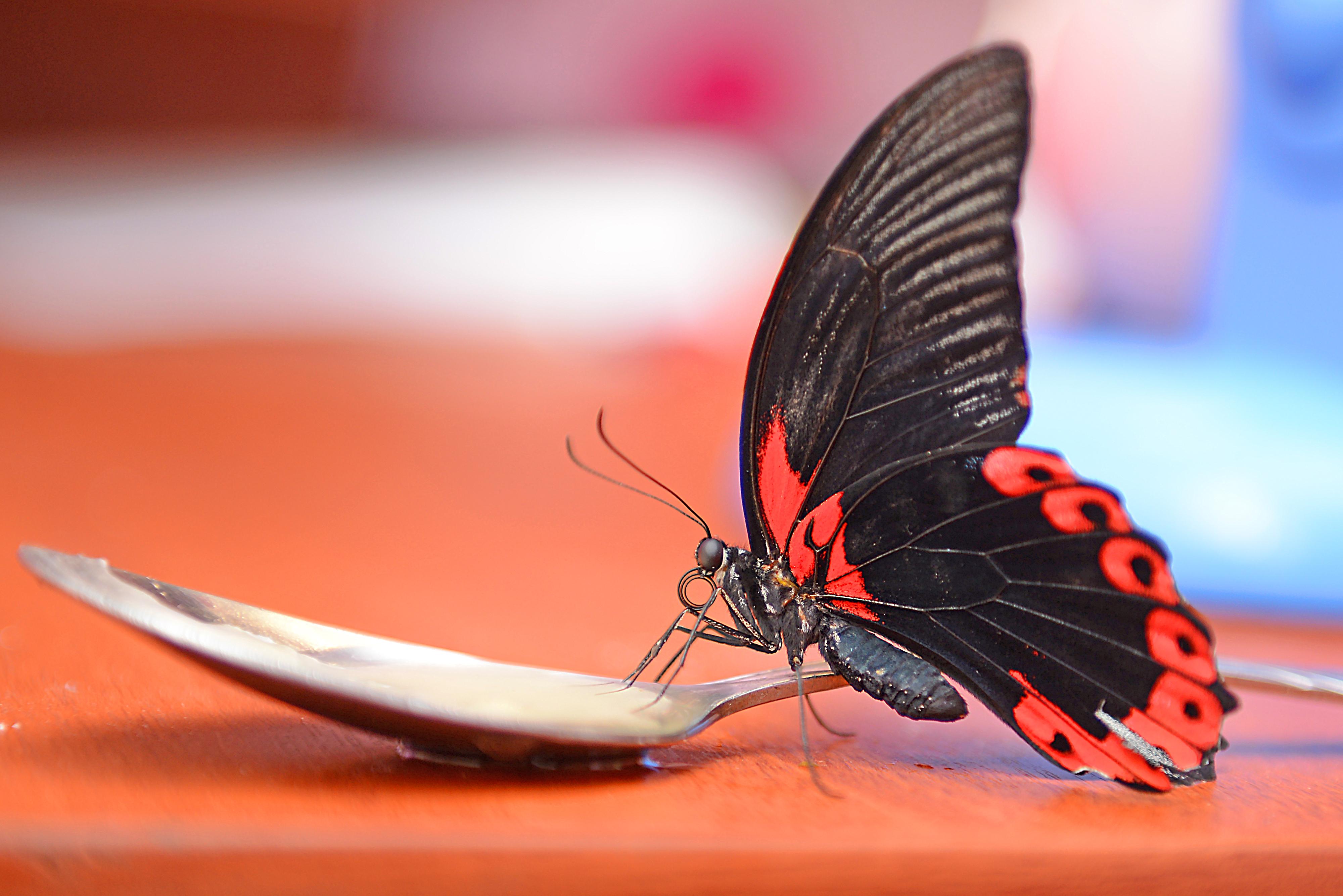 Хентай гостиница бабочка 2 фотография