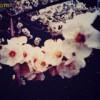 Весны прекрасное цветенье