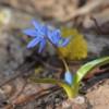 Маленький посланник весны