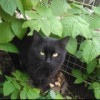 Самый ласковый кот в Старом Осколе!