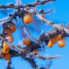 Оранжевый на синем