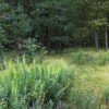 В лесной тиши