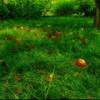 Яблоки)