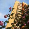 Розы около дома (м-н Восточный)