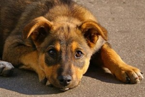 ОКАЗЫВАЕТСЯ, собаки тоже плачут
