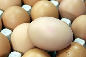 Предприниматель, продававший зараженные яйца в Старом Осколе, заплатит штраф