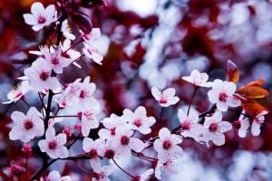 Центр Весны