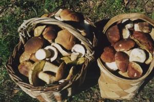 В Старооскольском округе возросло число случаев отравления грибами