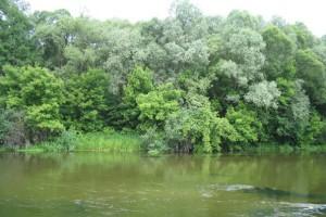 В реке Оскол нашли тело ребёнка, объявленного в розыск.