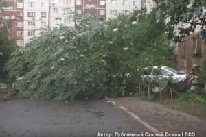 Во время урагана упавшее дерево травмировало 9тилетнюю девочку