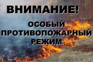 В лесах белгородчины продлён особый противопожарный режим
