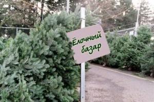 Елочные базары лесхоза начнут работать 19 декабря